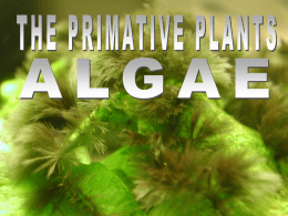 Algae Powerpoint - MUGAN`S BIOLOGY PAGE