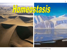 Homeostasis Powerpoint