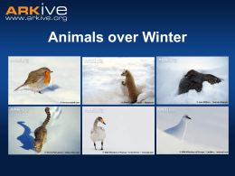 Animals over Winter