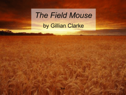 The Field Mouse - Biddick Academy