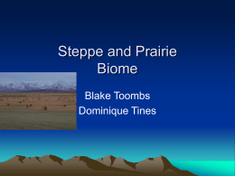 Steppe and Prairie Biome