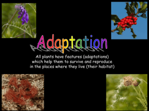 Plant adaptation PowerPoint Resource