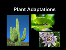 Plant Adaptations Lesson