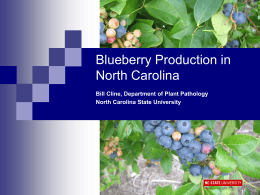 Blueberries for Local Sales and Pick-Your