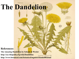 The Dandelion - schallesbiology
