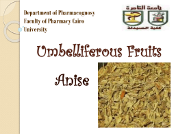 Umbelliferous Fruits - Faculty of Pharmacy