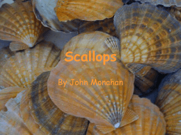 Scallops- Powerpoint