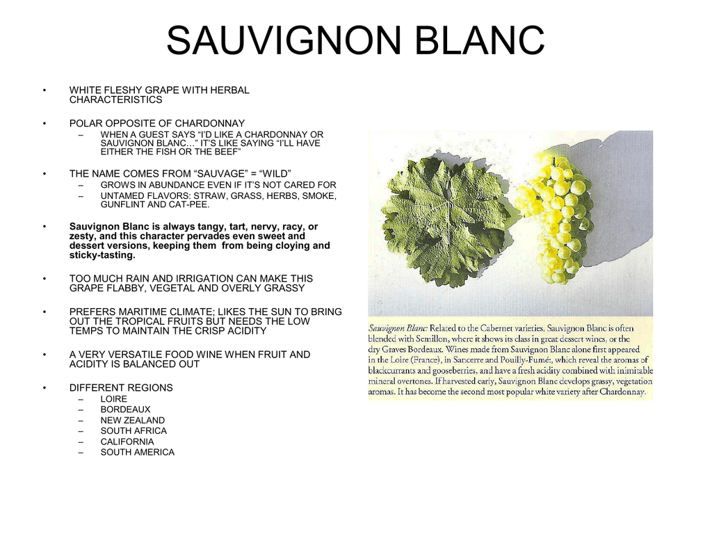 New Zealand Sauvignon Blanc Domestic cat Pee