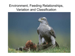 Environment, Feeding Relationships, Variation and