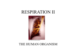 the respiratory system: mechanics of ventilation