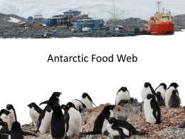 Antarctic Food Web PowerPoint Presentation