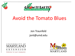 MG4 Tomato Blues - University of Maryland Extension