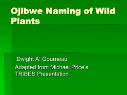 CYCLES_Ojibwe_Plant_Names