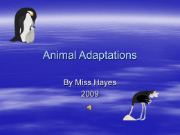 Animal Adaptations Power Point
