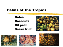 Palms of the Tropics
