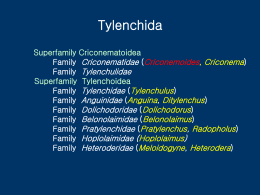 Tylenchida