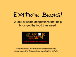 Extreme Beaks! - Windows to the Universe