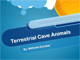 Terrestrial Cave Animals