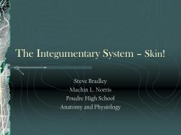 Integumentary Powerpoint 2