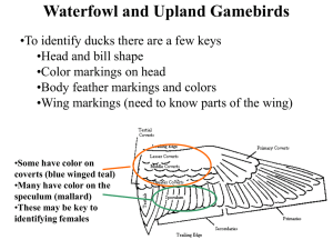 Freshman Waterfowl ID