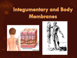Cutaneous membrane