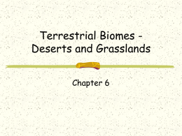 Biomes - Deserts and Grasslands