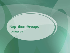 Reptilian Groups