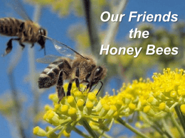 Honey Bee Anatomy & Biology