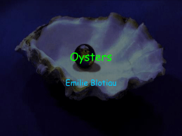 Oysters- Powerpoint