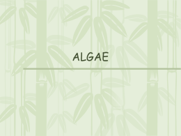 Algae - SharpSchool