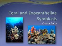 Coral and Zooxanthellae Symbiosis