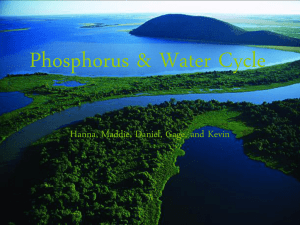 Phosphorus & Water Cycle