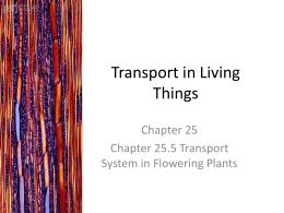 Transport of mineral salts - Transport in Flowering Plants