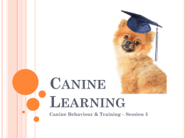 Canine Learning - Session 3