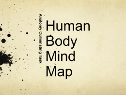Human Body Mind Map Project PPT