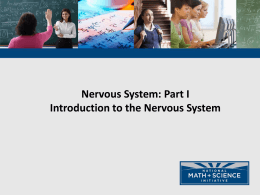 NMSI - 1 Intro to the Nervous System