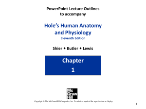 PowerPoint Lecture Outlines to accompany Hole*s Human Anatomy