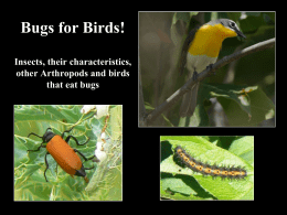 Bugs for Birds! Insects, their characteristics, other