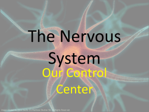 The Nervous System - Canton Local Schools