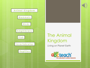 PowerPoint: Presentation: Sample: The Animal Kingdom w/Audio