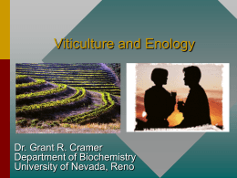 PowerPoint Presentation - Viticulture and Enology in the State of