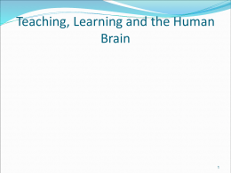Teaching and The Human Braine