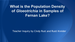 What is the population density of Gloeotrichia in Fernan Lake