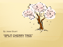 Split Cherry Tree - Laurel County Schools