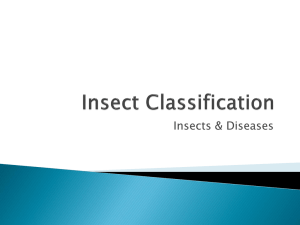 Insect Classification
