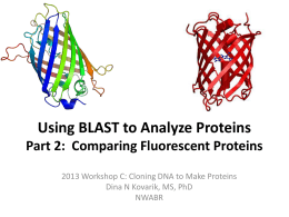 Using BLAST to Analyze Fluorescent Proteins