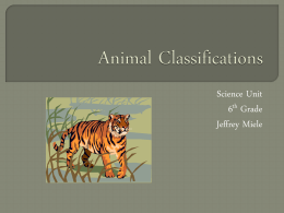 Animal Classifications PowerPoint – Jeffrey Miele