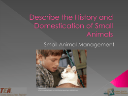 01A History of Small Animals PPT