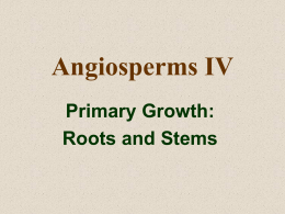 Roots and Stems