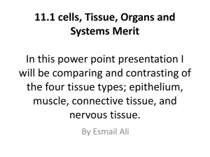 11.1 cells, Tissue, Organs and Systems In this power